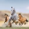 Correndo con i Cavalli