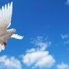 Non desiderare le ali di colomba